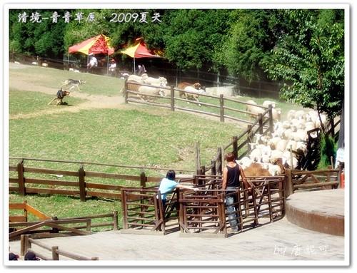 唐妮可☆吃喝玩樂過生活 拍攝的 20090802_清境青青草原19。