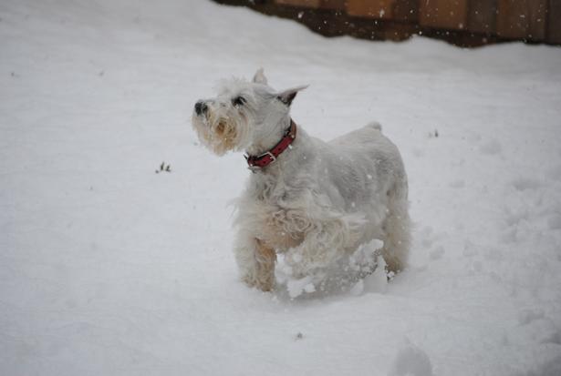 lola snow 2
