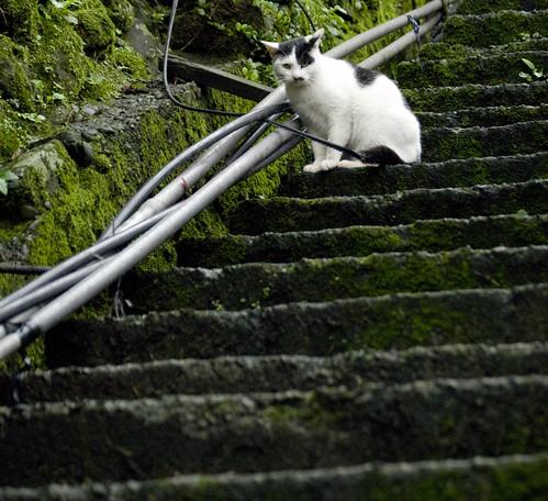 Street Cats in Taiwan 侯硐街貓