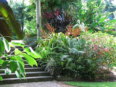Tropical landscaping, Cairns Botanic Garden (tanetahi) Tags: australia cairns northqueensland cairnsbotanicgardens tropicallandscaping