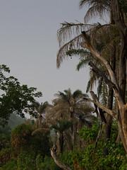 Paysage de l'Atakora (Justinsoul) Tags: voyage africa leica trip travel flickr afrika benin paysage pays pais afrique   atakora vlux1  fluidr outamari justinsoul