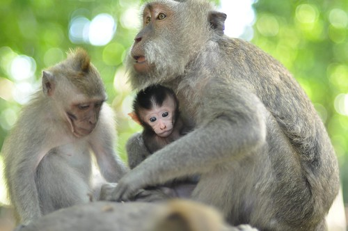 Post image for Project 365 – 048 – Monkey Family