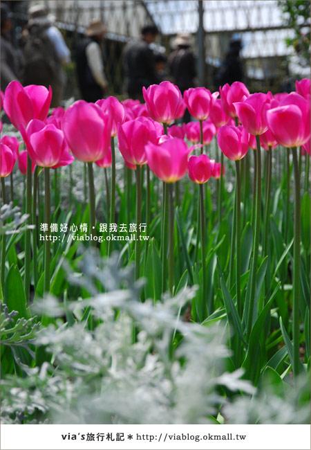 【梅峰農場】不止桃花美!梅峰農場賞花趣~(下)14