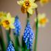 #81 - le printemps est arrivé