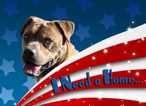 All American Dog, a female mutt, needs a forever home...