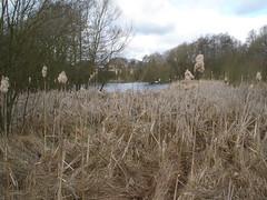 Plantbrook Nature Reserve
