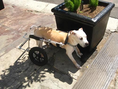 Wheeled Doggie