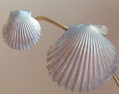 (1022 Sea Shell Ave) Tags: seashell scallop magnet authentic