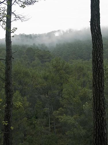 Marco para niebla
