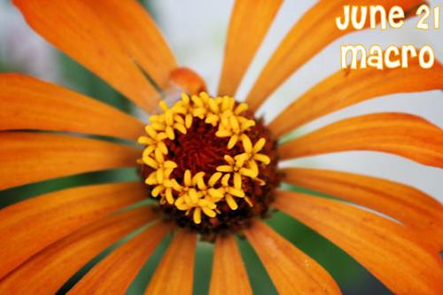 June 21--Macro