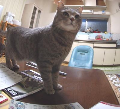 ずみ子、猫だけじゃないのよ