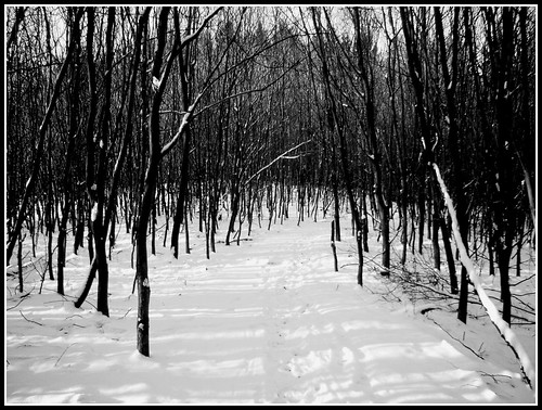 Eerie BW forest