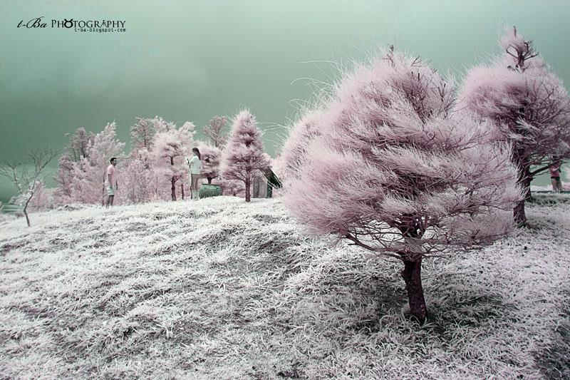 Tip Of Borneo - Infrared