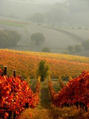 Rosso Conero (raffaphoto©) Tags: italy conero marche