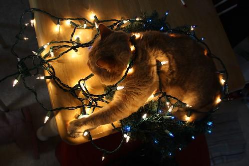 ChristmasCat 072