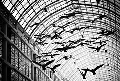The Birds (Philipp Klinger Photography) Tags: ca street trip travel roof light shadow sky sculpture white holiday snow toronto ontario canada black reflection bird art glass lines birds architecture contrast shopping michael flying geese nikon pattern geometry centre attack center canadian ceiling queen installation thebirds eaton yonge philipp 60 kanada on klinger michaelsnow flightstop d700 dcdead
