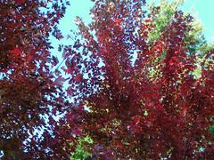 Fall Colors Boulder   DSCN0280