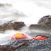 Red Sally lightfoot crab - Islas Plazas - Galapagos Islands