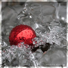 Christmas On Ice (Wonderfully Made Images) Tags: christmas red cold ice outside freezing sparkle ornament canon40d