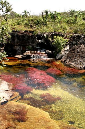 Cano Cristales (Colombia)