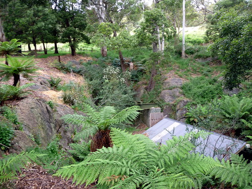 19_026 Tasman Ferns