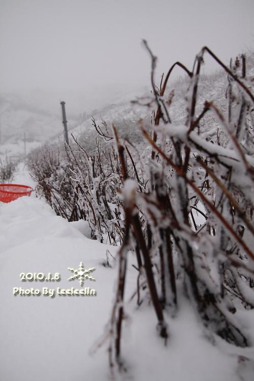 南投合歡山下雪