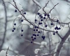 some frozen berries