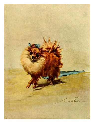 018-Pomeranian miniatura-The power of the dog 1910- Maud Earl