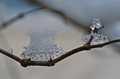 Sneeuw en ijskristal (Roelie Wilms) Tags: winter snow sneeuw ijskristallen icecristals ijskristal icecristal
