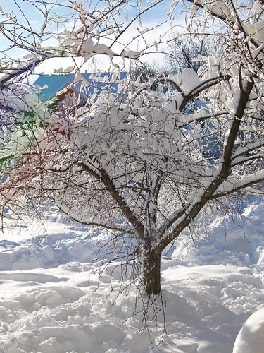 snow storm 2.7.10 011