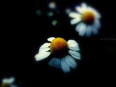 Nature & Revelation ©