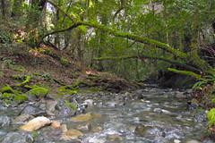 Creekbed Photo