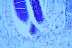 DSC_0196 (John Aho) Tags: microscopy hiddenworld nikond90 lietzmicroscope