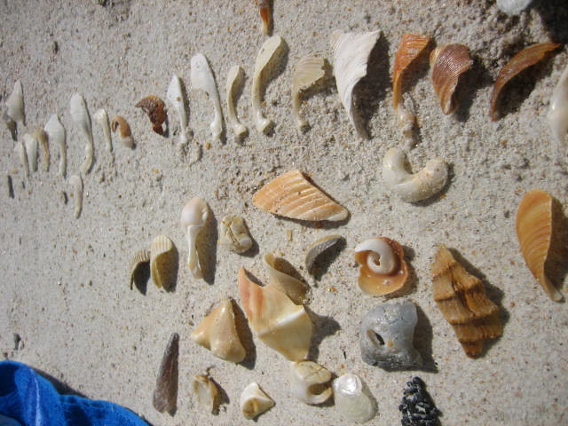 I organize the beach