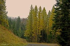 Mist On The Ridge (jimgspokane) Tags: autumn fall spokane mtspokane otw larchtrees tamaracktrees