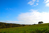 Leaning Against the Wind - An East Sussex Landscape (antonychammond) Tags: blue england sky tree green clouds landscape eastsussex soe herstmonceaux firsttheearth concordians scenicsnotjustlandscapes