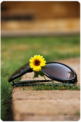 * (a f n a n *) Tags: flower green sunglasses yellow garden   afnan    mywinners   afnanmohammad