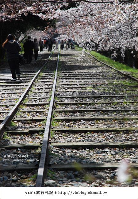 【via京都賞櫻行】鐵道上的櫻花美景~蹴上鐵道5
