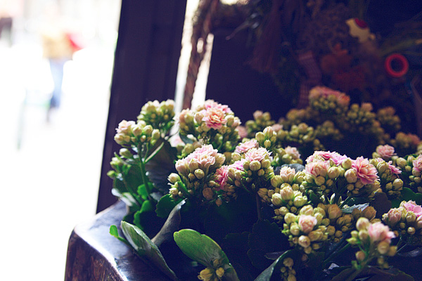 inside a flower shop.