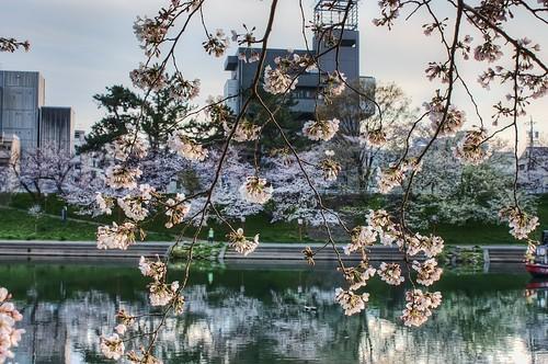 Sakura on a cloudy day along the Oto River