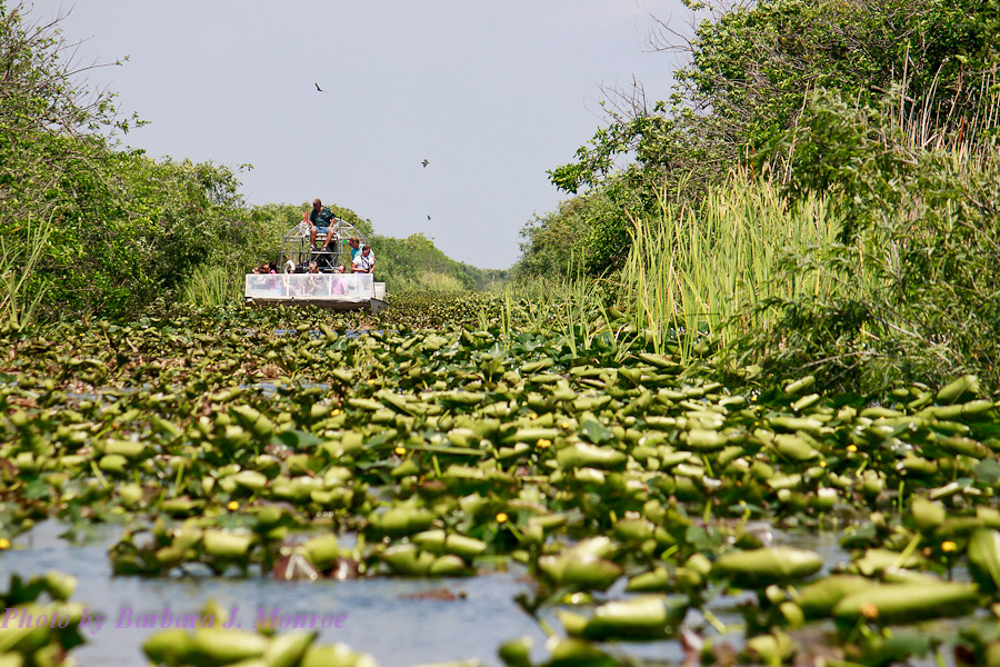 Everglades-Airboat Tour (1 of 16)