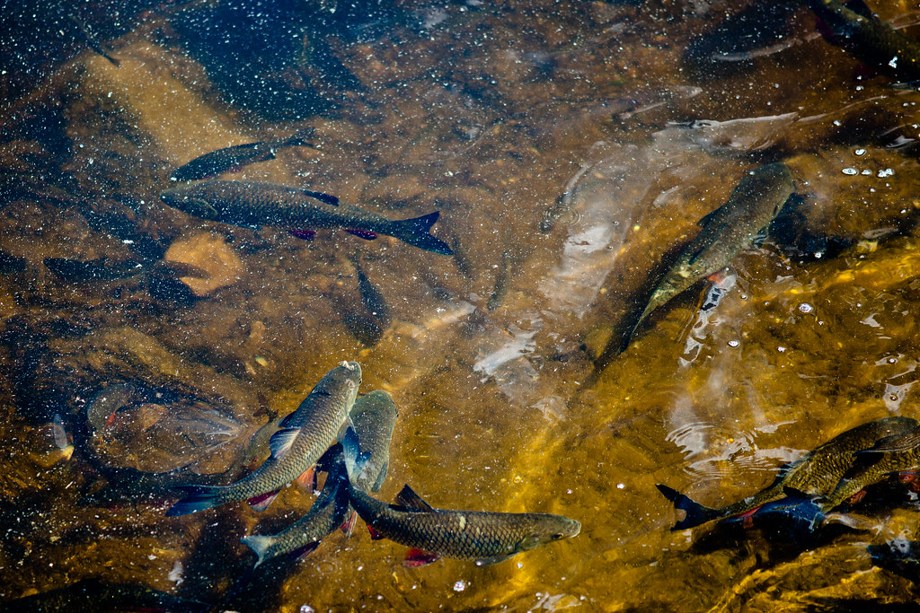 Chernobyl: Worm fish