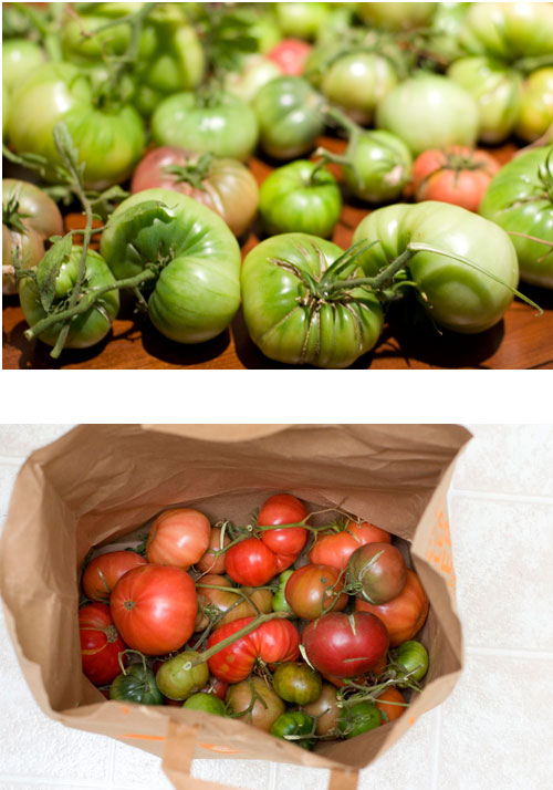 green tomatoes ripened in a paper bag