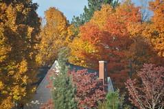 (Carolina Willow) Tags: autumn roof red chimney orange white house green fall peaks quaint