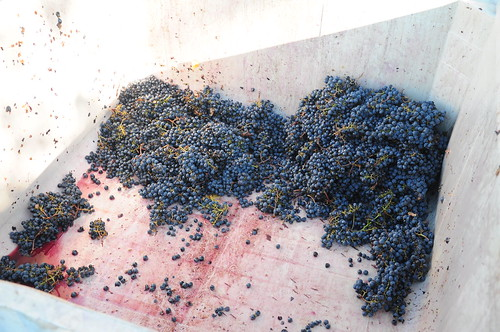 So hours and hours of grape processing later, we finally came to the end of the last vat.