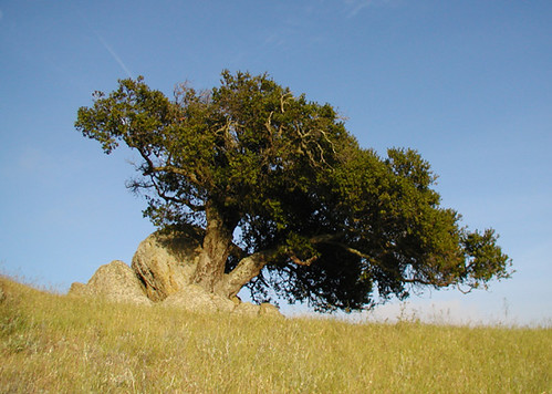 oakrock.jpg