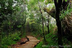 4_D308443-Taiwan Beech Trail, Yilan Conty, Tai...