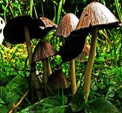 Village People (stmoritz1960) Tags: autumn trees nature grass leaves woodland walking woods ground fungi eastsussex damp toadstools stmoritz1960 bredewood