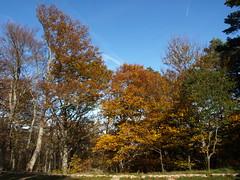 Moncayo en Otoño (Javier Garcia Alarcon) Tags: árboles paisaje bosque árbol otoño moncayo