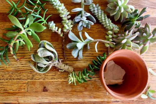 succulent presents